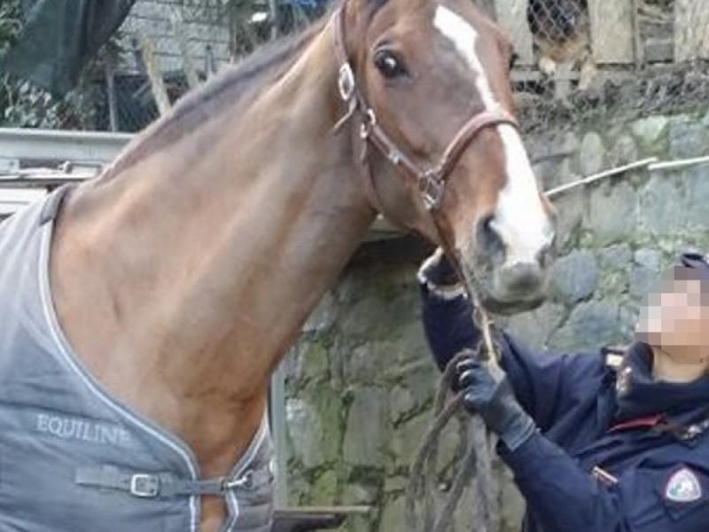 Ivrea, ubriaco a cavallo denunciato per guida in stato di ebbrezza: scatta la sospensione della patente