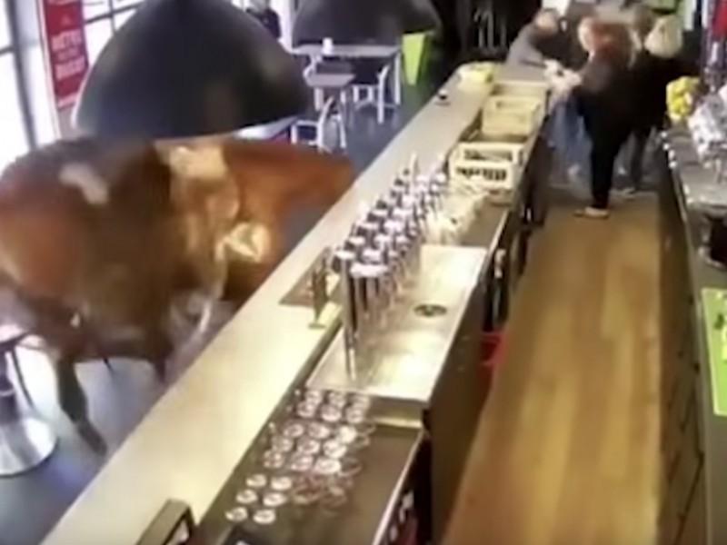 Francia, cavalla imbizzarrita scappa dall'ippodromo ed entra in un bar: la fuga dei clienti terrorizzati