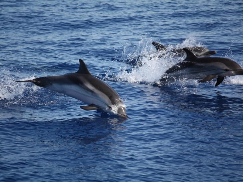 """Eolie, pescatori contro delfini: """"Ci rubano il pesce"""""""