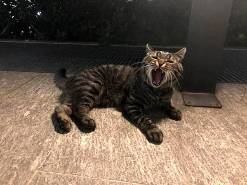 """""""Notte da leoni"""" a Milano, rapiscono un gatto e scappano: """"Scusami, ero drogato"""""""